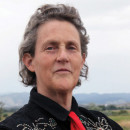 A Neurodevelopmental Approach to Autism: with Temple Grandin, Ph.D.